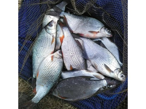 Рыбалка на Фидер весной на реке Оке